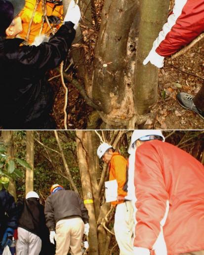 発見された被害木(アラカシ)とそれを見学する参加者