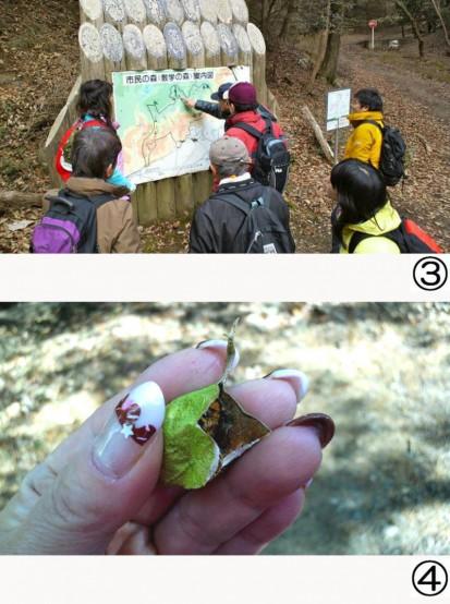 葉っぱのような繭の中に蛾の幼虫