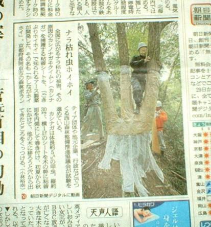"""京都でのナラ枯れ用""""粘着テープ""""の活用を伝える新聞"""