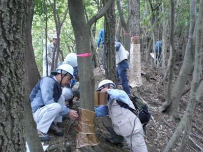 箕面公園(落合谷)で「ナラ枯れ」対策を実施03