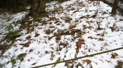 2.15雪の野草園 (2)