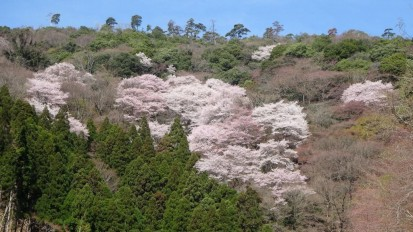 杉の茶屋1