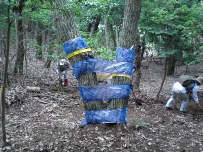 被害木・シート設置
