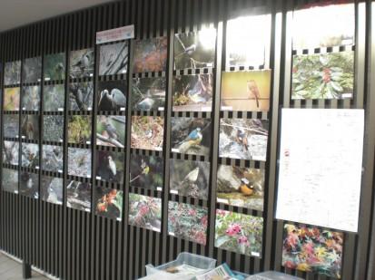 野鳥の展示