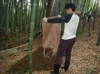 竹林にまく