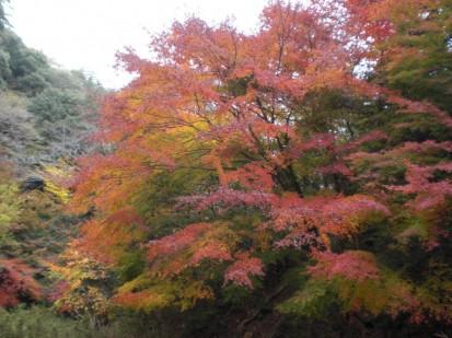 園地の紅葉2