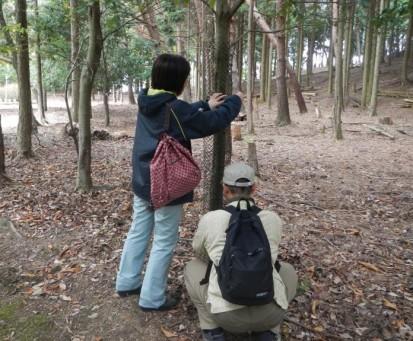 樹木ネット1