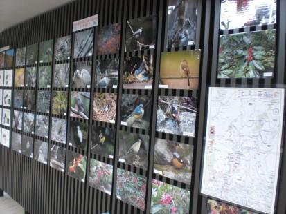 冬鳥の展示