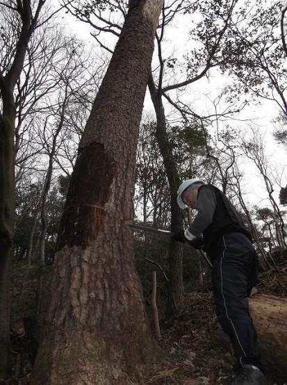 里プラ大木と