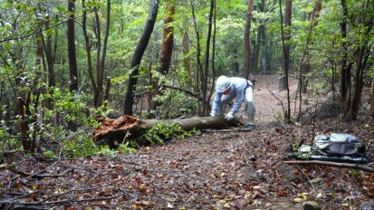 DSC00058 危険木処理 1