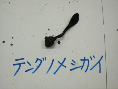 テングノメイシガ