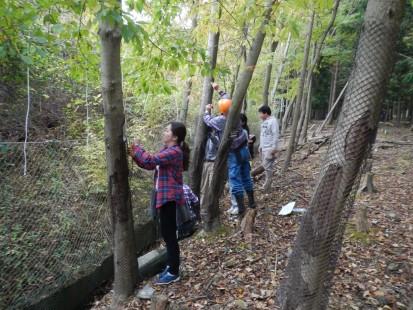 樹木防護ネット2