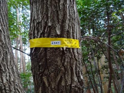 健全木調査5号線