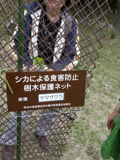 樹種プレート