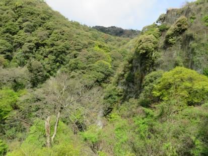 箕面大滝周辺新緑