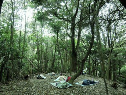 広葉樹の下で森林安息2 (800x600) (640x480)