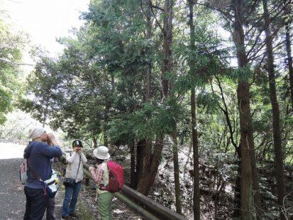 ひのきと杉の香り比べ (640x480)